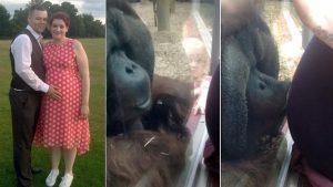 orangutan incredible reaction to pregnant woman