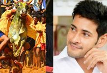 mahesh reaction to jallikattu for his movie