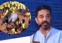 kamal hassan says celebrities don't interfere on jallikattu banned