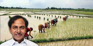 why kcr showing concern towards farmers
