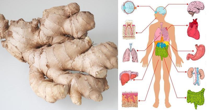 ginger for good health