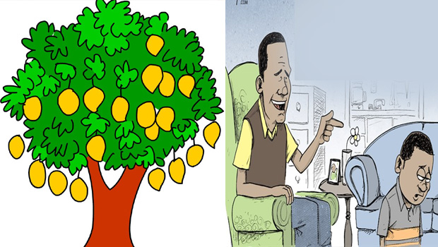 Mango tree branch cutting for tree growing parents scold son should being good human